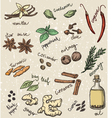 spice and herbs vector image