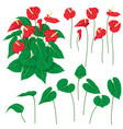 anthurium flowers set vector image vector image