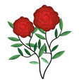 beautiful rose decoration icon vector image vector image