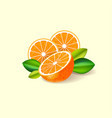 oranges ripe juicy fruits leaves vector image vector image