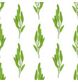 sage salvia herb seamless pattern vector image vector image