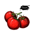 Tomato drawing Isolated tomatoes on branch vector image vector image