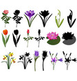 collection different species flowers colour and vector image