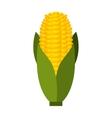 corn cob isolated icon design vector image vector image