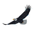 flying bald eagle from a splash watercolor vector image vector image
