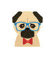 portrait of a pug dog in glasses and a bow tie vector image