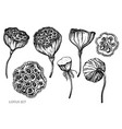 set hand drawn black and white lotus vector image vector image