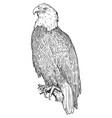 bald eagle bird drawing vector image