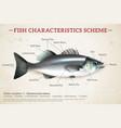 fish scheme infographics vector image vector image