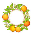grapefruit frame vector image vector image