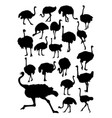 ostrich animal detail silhouettes vector image vector image