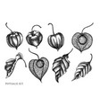 set hand drawn black and white physalis vector image vector image