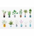 set of plants and flowers vector image vector image