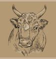 surprised head bull hand drawing vector image
