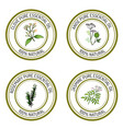 set of essential oil labels clove anise rosemary vector image vector image