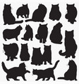 british shorthair cat silhouettes vector image