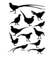 pheasant animal detail silhouettes vector image