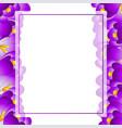 purple crocus flower banner card border vector image vector image