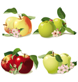 set of ripe apples vector image vector image