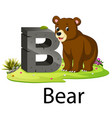 zoo animal alphabet b for bear vector image vector image