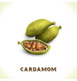 Cardamom isolated on white vector image