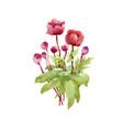 hand drawn pink peony flowers isolated on white vector image