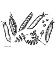 set hand drawn black and white peas vector image vector image