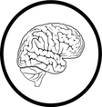 brain vector image
