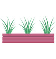 decorative indoor evergreen plant in long narrow vector image