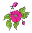 hand drawing peony flowers vector image