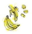 watercolor hand drawn set of banana sketch vector image