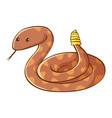 rattle snake on white background vector image vector image