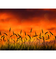 silhouette wheat when sunset vector image