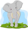cartoon happy elephant in grass vector image vector image