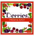 fresh and juicy berries garden agriculture organic vector image
