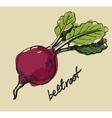 hand drawn beet vector image vector image