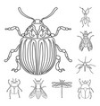 insect and fly logo vector image vector image