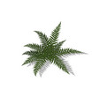 plant in isometric style cartoon tropical fern vector image