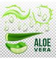 elements of eco healthcare aloe vera set vector image