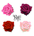 roses flowers set vector image vector image