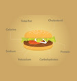 hamburger nutrition fact details with flat style vector image