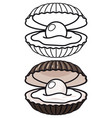 cartoon and outline sea shell vector image vector image