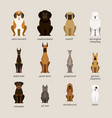 dog breeds set giant and large size vector image vector image