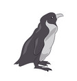 penguin sketch color vector image vector image
