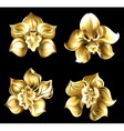 set gold orchids vector image vector image