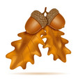 autumn oak acorns with leaves vector image