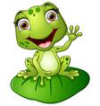 cartoon frog sitting on the leaf vector image