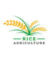 rice farming logo design vector image