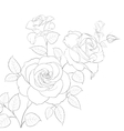 White rose isolated vector image