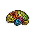 brain parts with gyrus colored atlas side view vector image